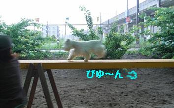 スピード.jpg