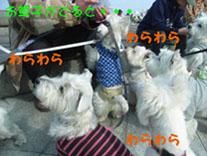犬使い.jpg